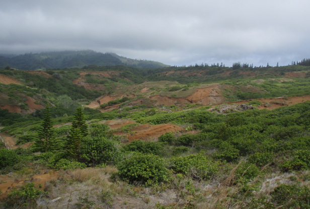 The verdant colors of Lana'i's Back Country