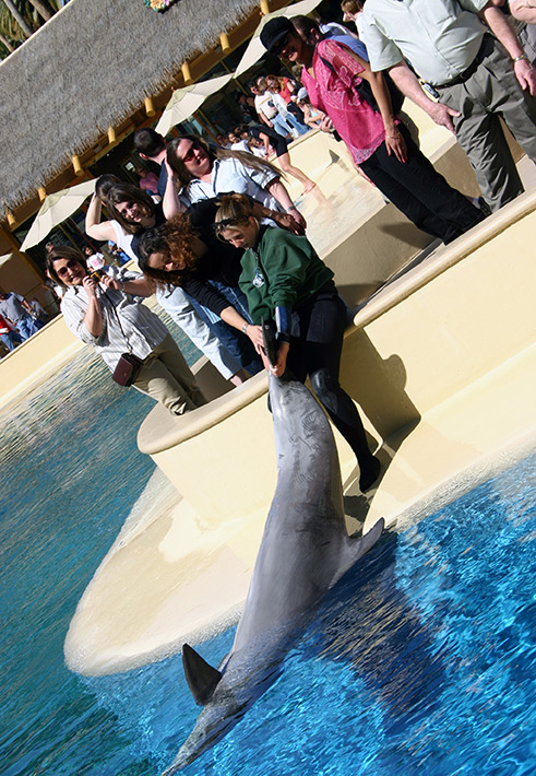 Guests petting dolphins at Mirage